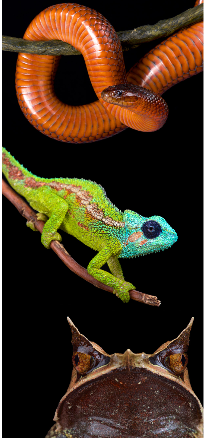 New Book Showcases Rare and Incredible Herp Photography